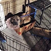 Adopt A Pet :: Dudley - Missouri City, TX