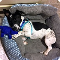 Adopt A Pet :: Kip - Knoxville, TN