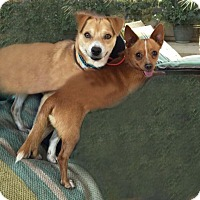 Adopt A Pet :: Teddy - Toluca Lake, CA
