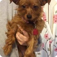 Adopt A Pet :: Ruby - Kansas city, MO