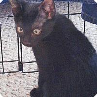 Adopt A Pet :: Fiesta - N. Billerica, MA