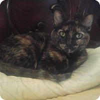 Adopt A Pet :: Farrah - Tiptonville, TN