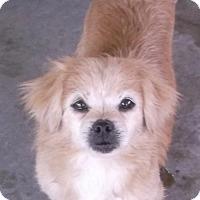 Adopt A Pet :: Happy - Bonifay, FL
