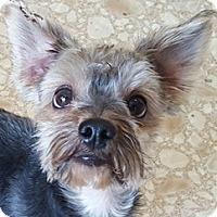 Adopt A Pet :: Tristan - Bloomington, IL