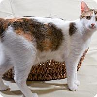 Adopt A Pet :: Mika - Nashville, TN