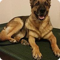 Adopt A Pet :: Chance - Morrisville, NC