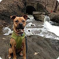 Adopt A Pet :: Jenna - Rexford, NY