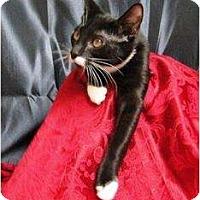 Adopt A Pet :: Oreo - Orlando, FL