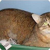 Adopt A Pet :: Miss Priss - Lake Charles, LA