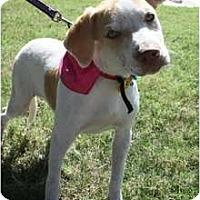 Adopt A Pet :: Annie - Arlington, TX