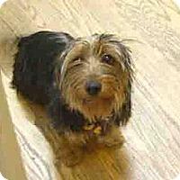 Adopt A Pet :: Daisy - San Jose, CA