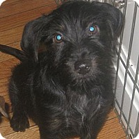 Adopt A Pet :: Wiley(ADOPTED!) - Chicago, IL