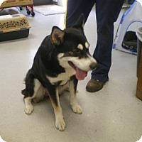 Adopt A Pet :: Trixie - Inverness, FL
