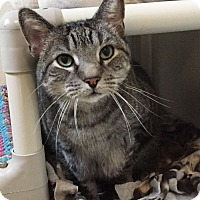 Adopt A Pet :: Mungie - Colorado Springs, CO