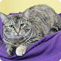 Adopt A Pet :: Pixie - Benbrook, TX