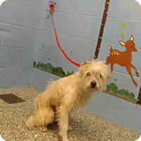 Adopt A Pet :: URGENT on 4/1 SAN BERNARDINO - San Bernardino, CA