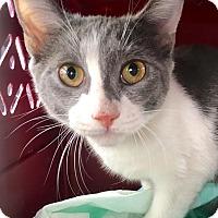 Adopt A Pet :: Hazel - East Brunswick, NJ