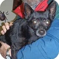 Adopt A Pet :: BoBo - Awesome Boy! - Quentin, PA