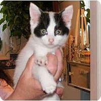 Adopt A Pet :: Googles - Colmar, PA