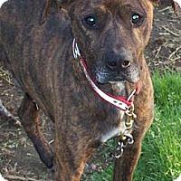 Adopt A Pet :: KING - Hilham, TN
