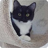 Adopt A Pet :: Princess - Thousand Oaks, CA