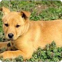 Adopt A Pet :: Ainsley - Staunton, VA