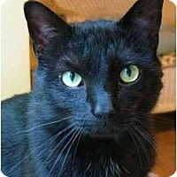 Adopt A Pet :: County - Plainville, MA
