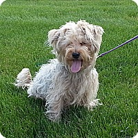 Adopt A Pet :: Suzie - Downers Grove, IL