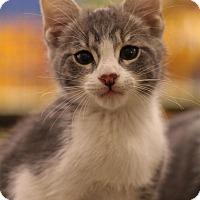 Adopt A Pet :: Vasume - Sacramento, CA