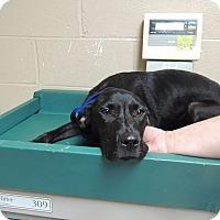 Adopt A Pet :: Edison - Boston, MA