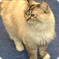 Adopt A Pet :: Madison - Davis, CA