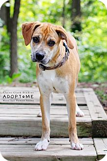 Terrier (Unknown Type, Medium) Mix Dog for adoption in Edwardsville, Illinois - Maverick