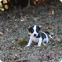 Adopt A Pet :: Digger - Groton, MA