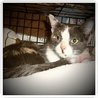 Adopt A Pet :: AMINA - Medford, WI