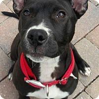 Adopt A Pet :: Sushi - Tampa, FL