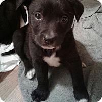 Adopt A Pet :: Nina - GREENLAWN, NY