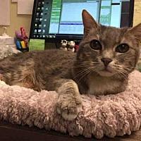 Adopt A Pet :: PRINCESS - Pasadena, CA