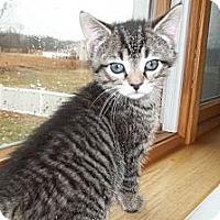 Adopt A Pet :: Kenya - Acme, PA