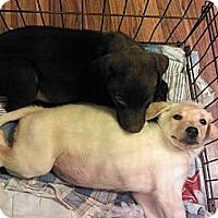 Adopt A Pet :: Sam - Murfreesboro, TN