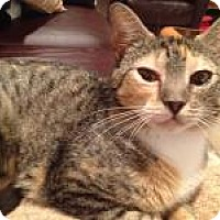 Adopt A Pet :: Rainbow - East Hanover, NJ