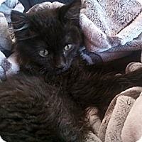 Adopt A Pet :: Kippy - Alexandria, VA