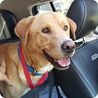 Adopt A Pet :: George - Brooklyn, NY