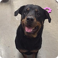Adopt A Pet :: Xena - Holland, MI
