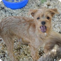 Adopt A Pet :: Cisco - Vacaville, CA