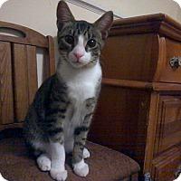 Adopt A Pet :: TITO - Raleigh, NC