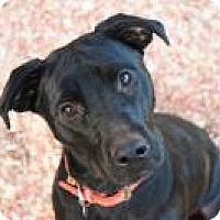 Adopt A Pet :: Raven - Greensboro, GA