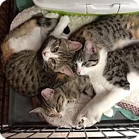 Adopt A Pet :: Jill - West Dundee, IL