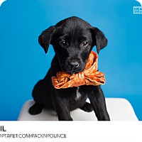 Adopt A Pet :: Bail - Ogden, UT