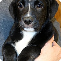 Adopt A Pet :: Mitzi - Towson, MD