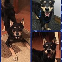 Adopt A Pet :: Chase - Elizabethtown, PA